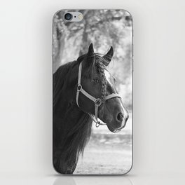 Stunning Gypsy Vanner iPhone Skin