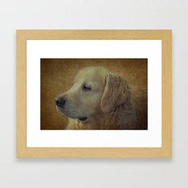 Golden Retriever Framed Art Print