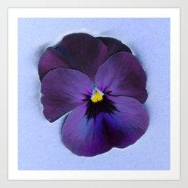 Ultra violet viola tricolor Art Print