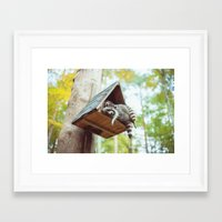 racoon Framed Art Prints featuring racoon by Kalbsroulade