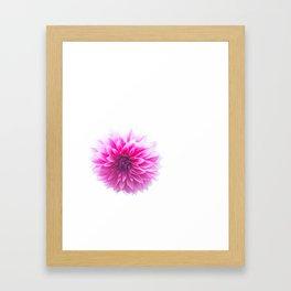 Dahlia On White Framed Art Print