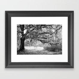 New Orleans Oak Tree Framed Art Print