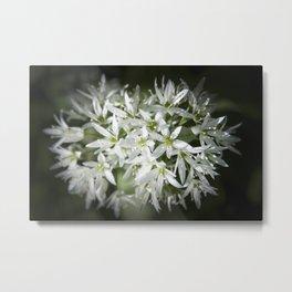 Wild Garlic Metal Print