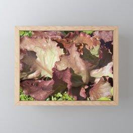 Red Leaf Lettuce leaves freshly picked Framed Mini Art Print