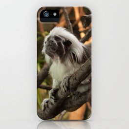 Wise Old Monkey iPhone Case