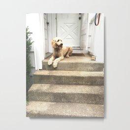 Golden Doodle Dog on the Porch Steps Metal Print