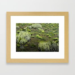 Cactus land Framed Art Print