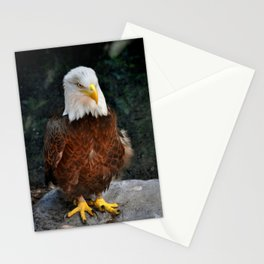 Southern Bald Eagle Stationery Cards