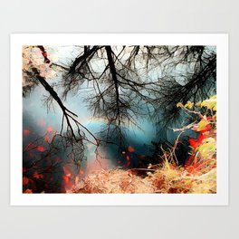 REFLECTING PINE BARRENS POND Art Print
