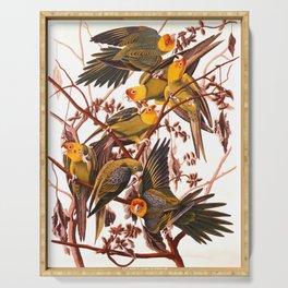 Carolina Parakeet by John James Audubon - Vintage Painting Serving Tray