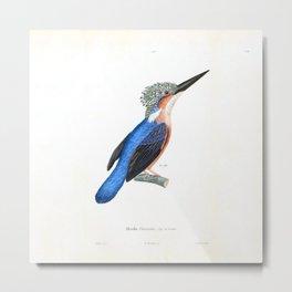 The King Fisher Metal Print