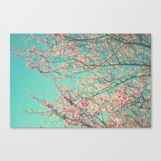 pretty pink blossoms Canvas Print
