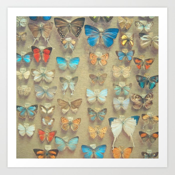 The Butterfly Collection II Art Print
