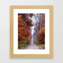Walking in the Elm Framed Art Print