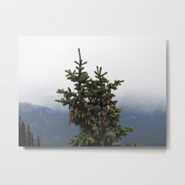 Canadian Spruce Metal Print