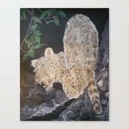 Leopard Caught in the Light. Canvas Print