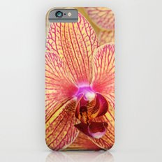 Explosion of Orchids iPhone 6s Slim Case