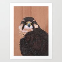 falcon Art Prints featuring Falcon by LouiseDemasi