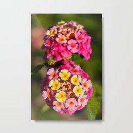 Lantana flowers Metal Print