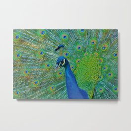 Peacock Illustration Metal Print