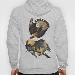Caracara Eagle Of Brazil - John James Audubon Hoody