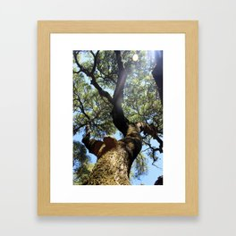 Tree at Jack London's Estate Framed Art Print