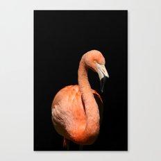 Flamingo III Canvas Print