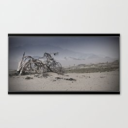 Lost Tree Canvas Print
