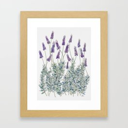 Lavender, Illustration Framed Art Print