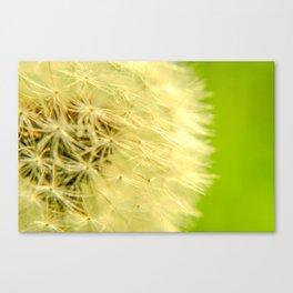 Technicolor Dandelion Canvas Print
