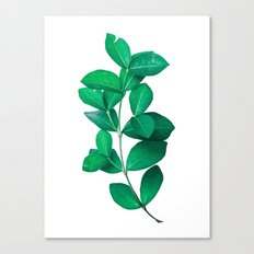 Green Leaves in White background Canvas Print