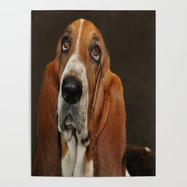 Lost In Thought Basset Hound Dog Poster