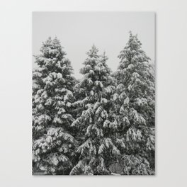 Tree Trio Canvas Print