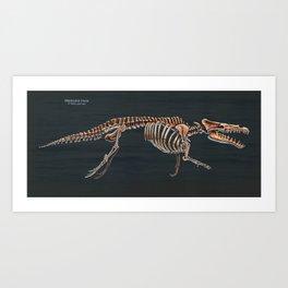 Maiacetus inuus Skeletal Study Art Print