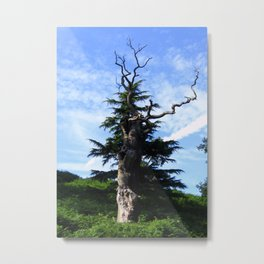 Twisted Tree Metal Print
