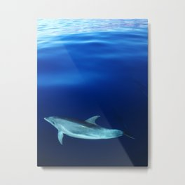 Dolphin, blue and sea Metal Print