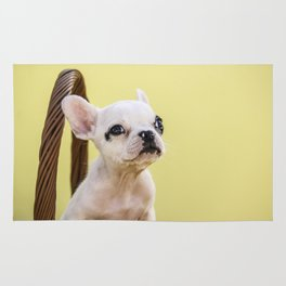 Tiny French Bulldog Puppy in Basket with Yellow Background Rug