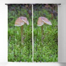 Tiny Fungi. Blackout Curtain