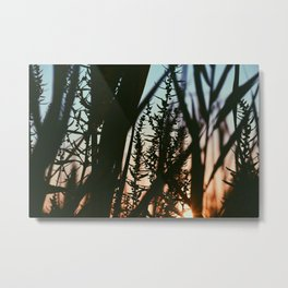 sun searching Metal Print