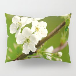 Cherry Tree Branch With White Flowers #decor #society6 Pillow Sham