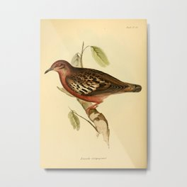 The Zoology of the Voyage of HMS Beagle 1840 - Birds 46: Zenaida galapagoensis Metal Print