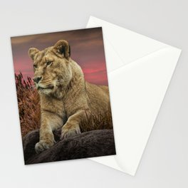 African Female Lion in the Grass at Sunset Stationery Cards