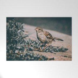 Summer Sparrow. Bird Photograph Welcome Mat