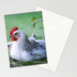 Chicken beauties of the Sussex breed Stationery Cards
