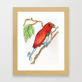 Bird of Paradise 3 Framed Art Print