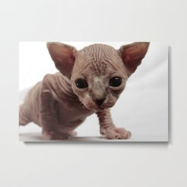 Freaky Cute Furless Sphynx Kitten Metal Print