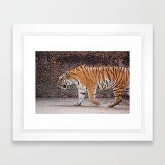 Tiger on the Prowl Framed Art Print