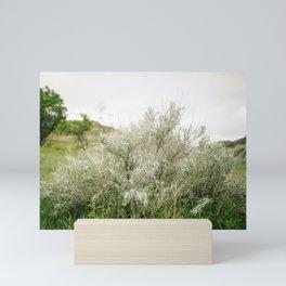 Silver Leaf Sagebrush // North Dakota, Theodore Roosevelt National Park Mini Art Print