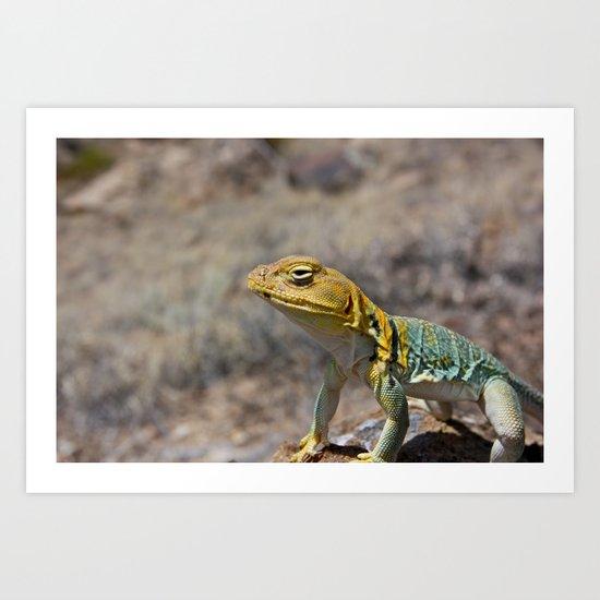 Collared Lizard 2 Art Print