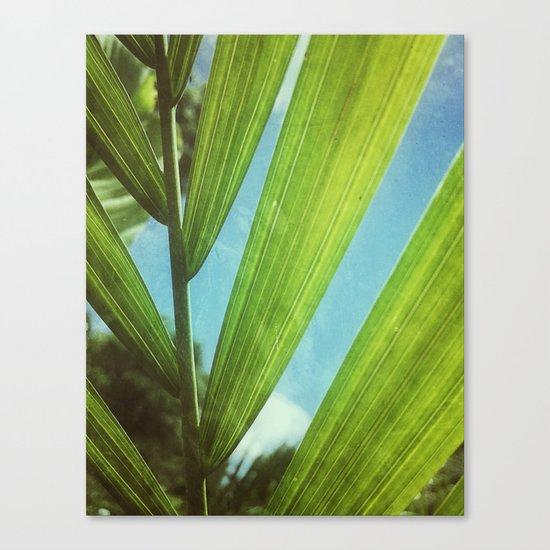 Tropical Outlook Canvas Print